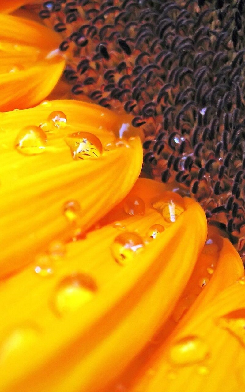 macro-sunflower.jpg