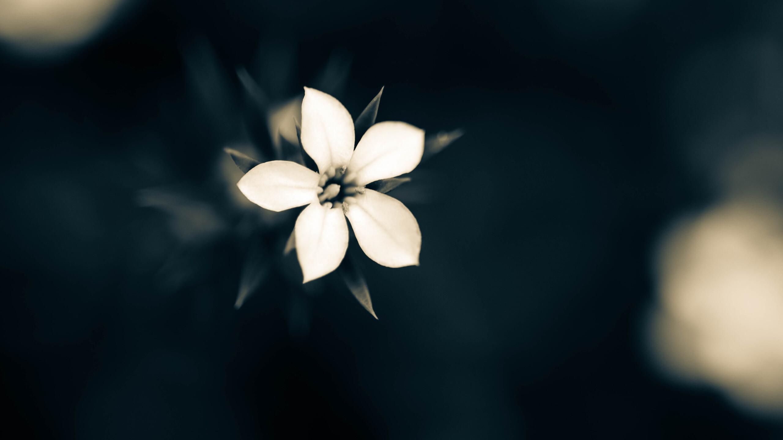 2560x1440 Macro White Flower Plant ...