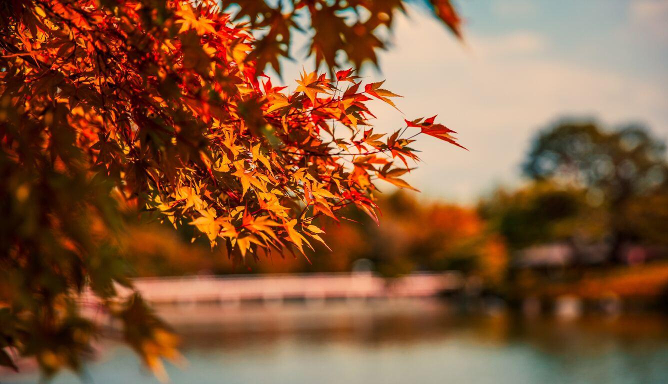 maple-tree-autumn-lake-5k-3j.jpg