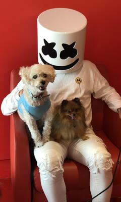 marshmello-with-dog-by.jpg