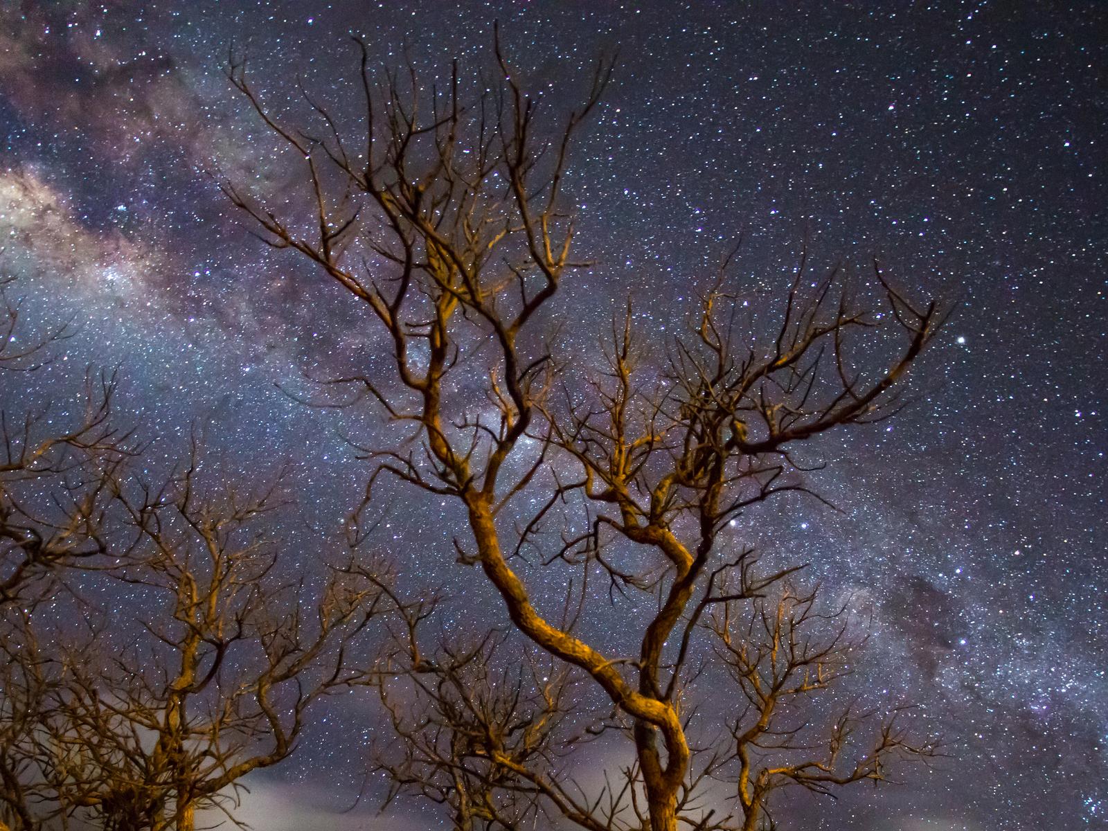 milky-way-galaxy-tree-dark-4k-x0.jpg