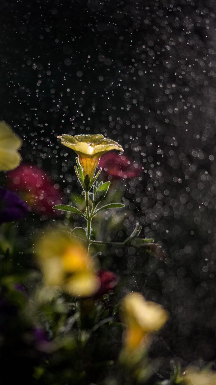 mist-flowers-ad.jpg
