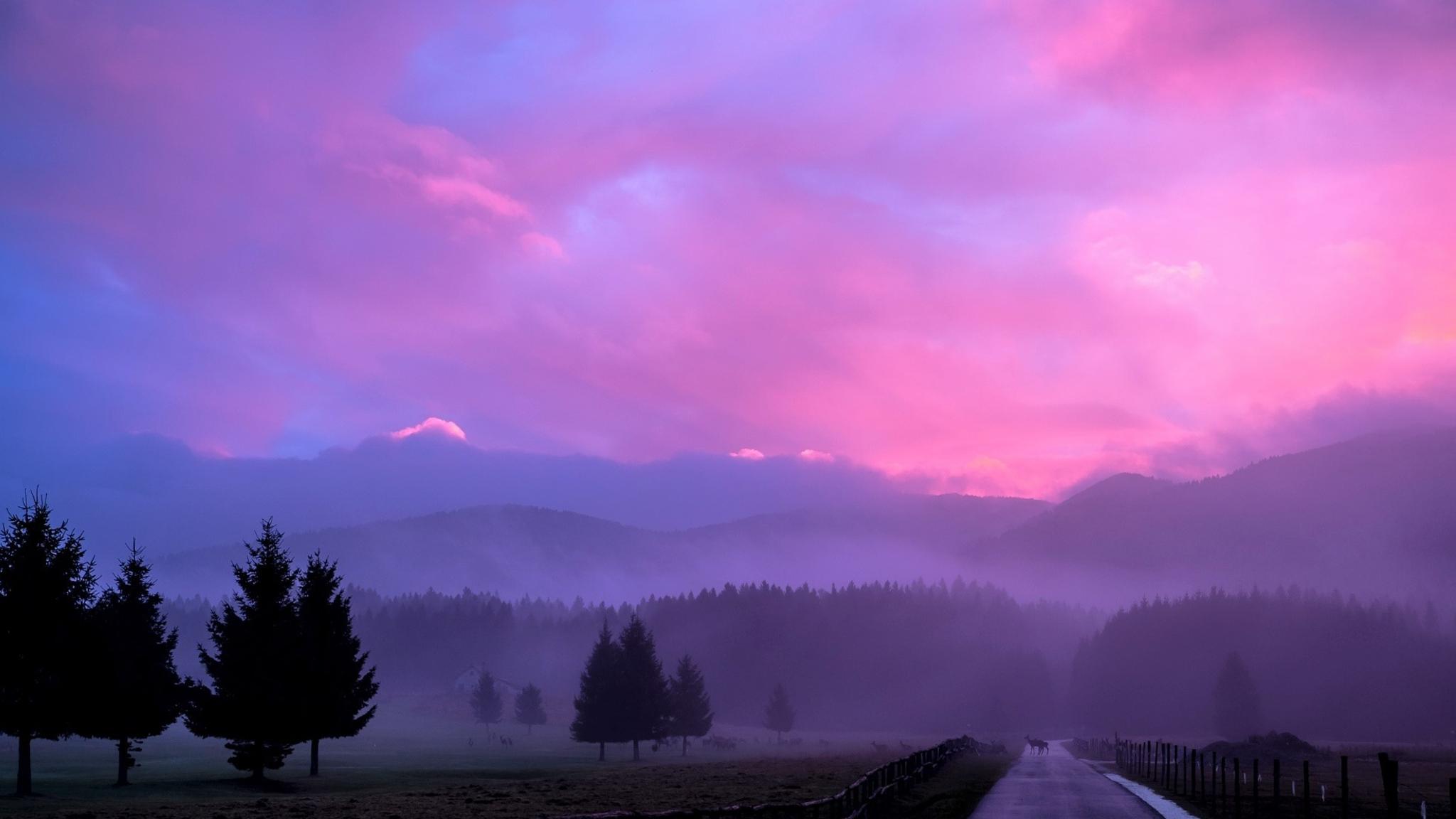 олени туман утро рассвет анонимно