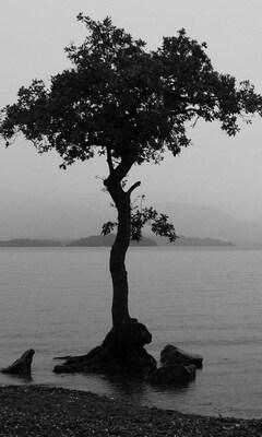 monochrome-nature-wide.jpg