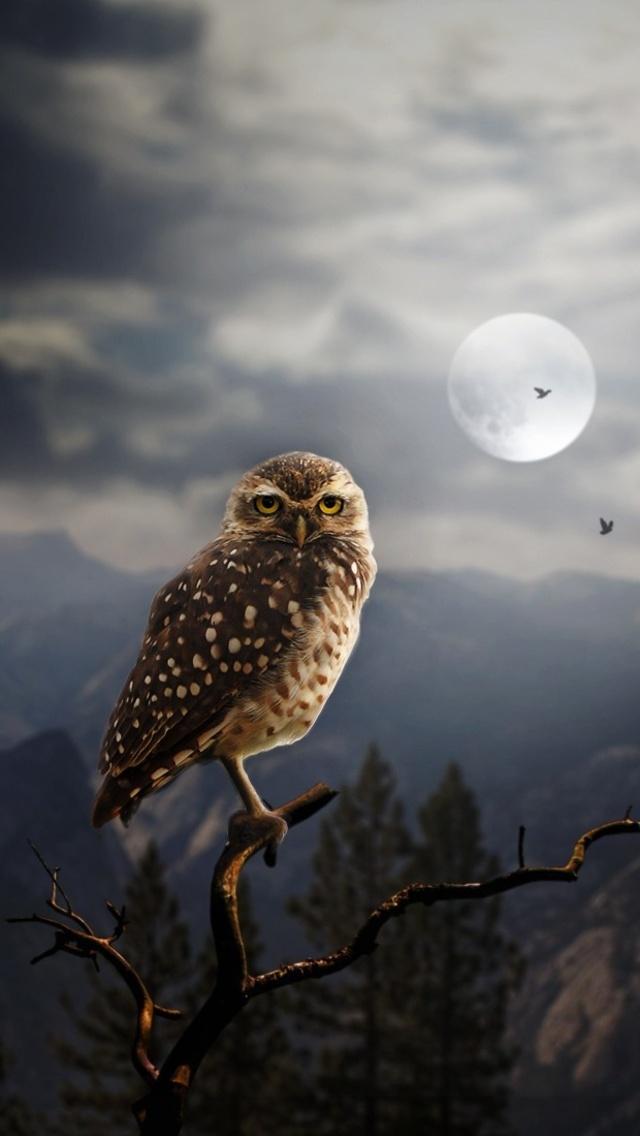 moon-fantasy-owl-bq.jpg