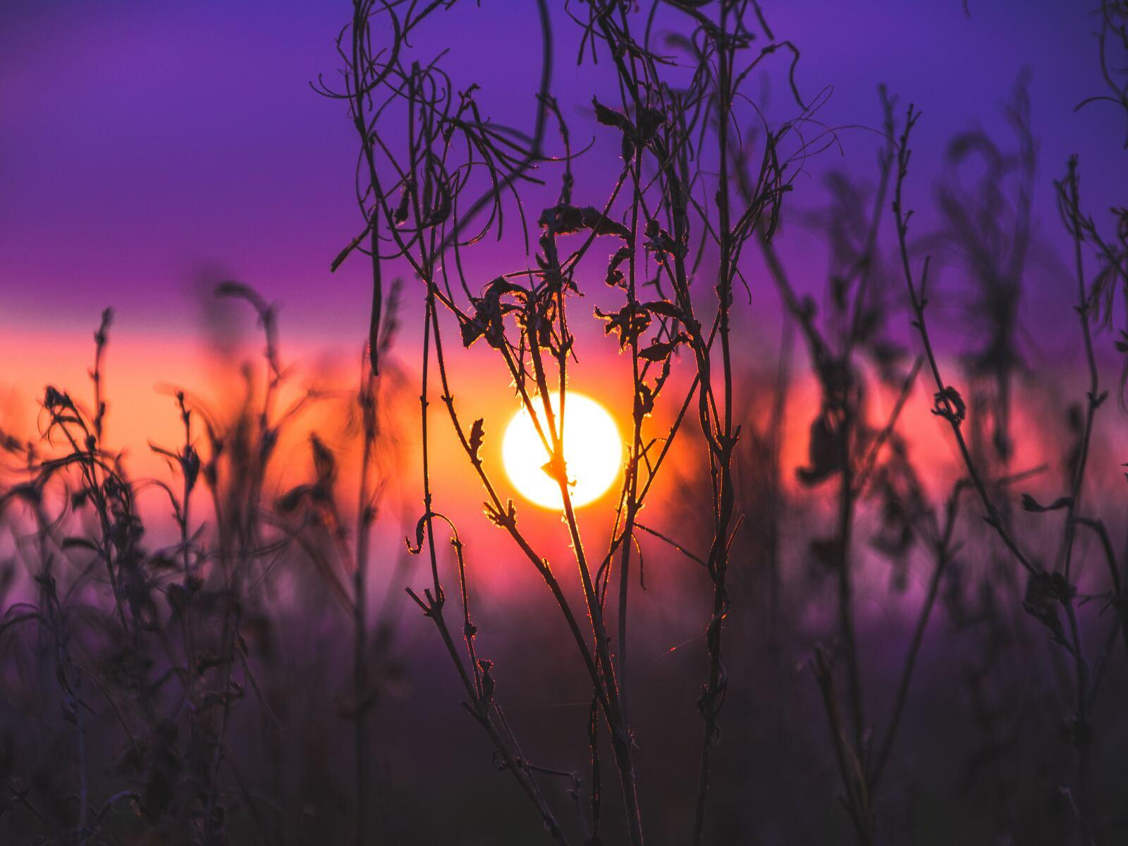 morning-glow-grass-field-so.jpg