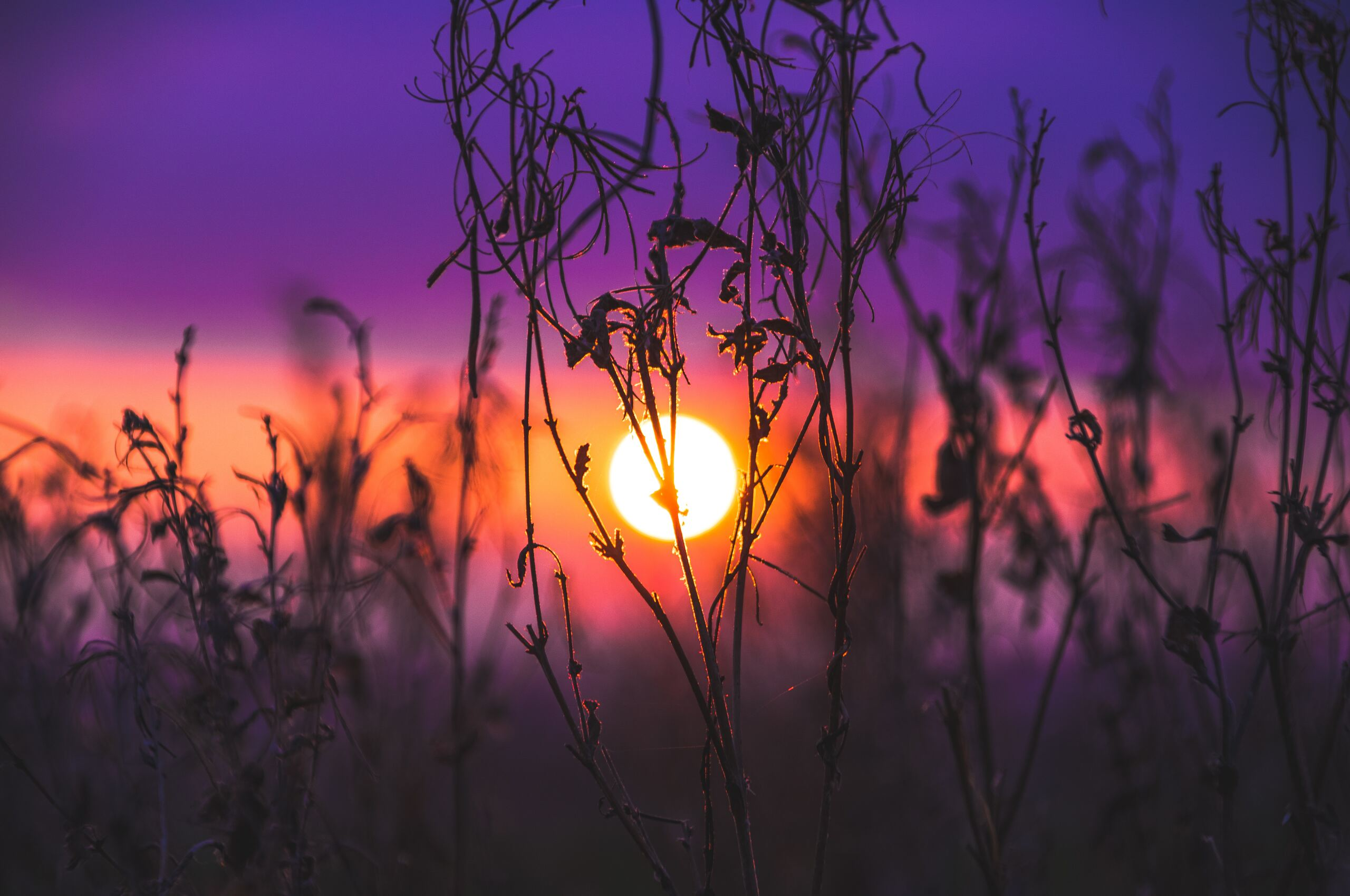 morning-glow-grass-field-so.jpg