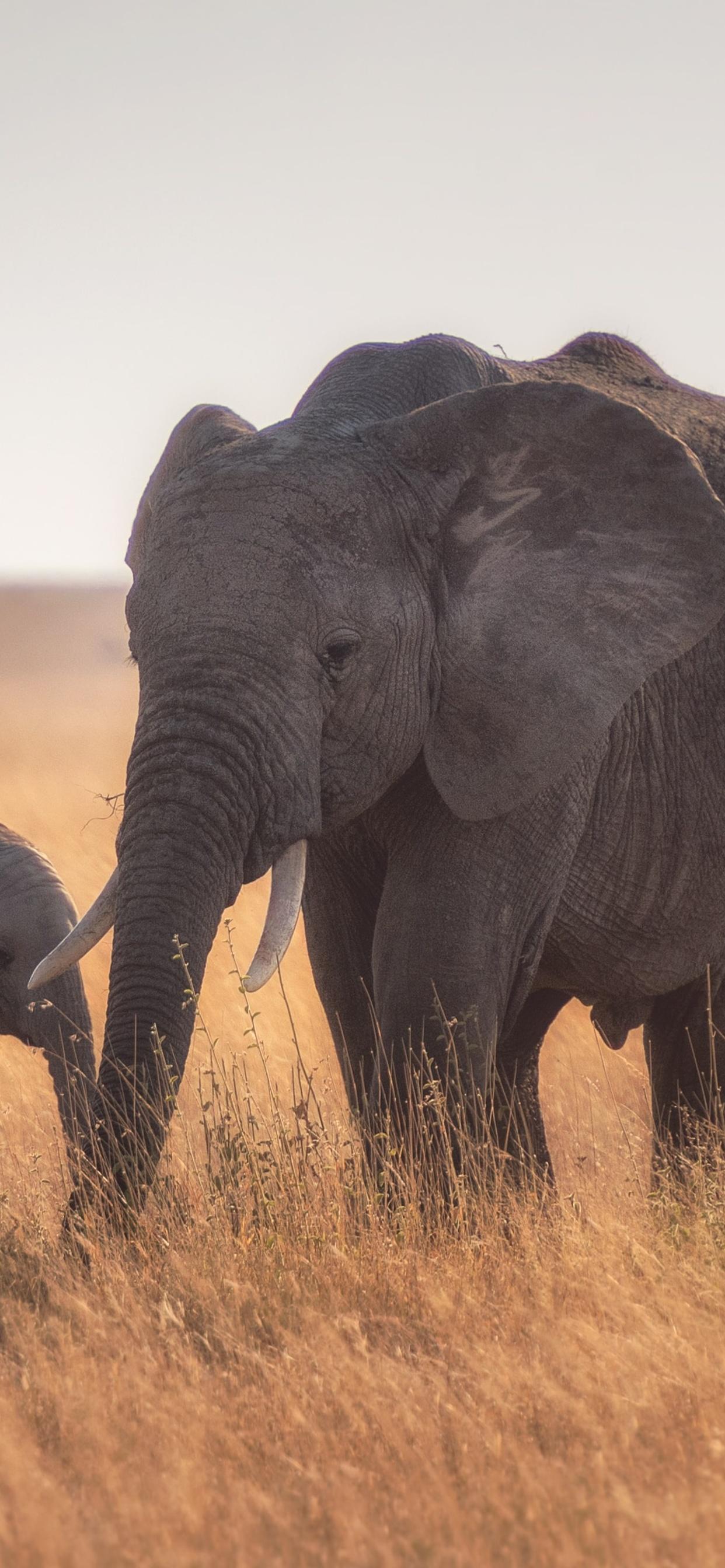 mother-baby-elephant-4k-ki.jpg
