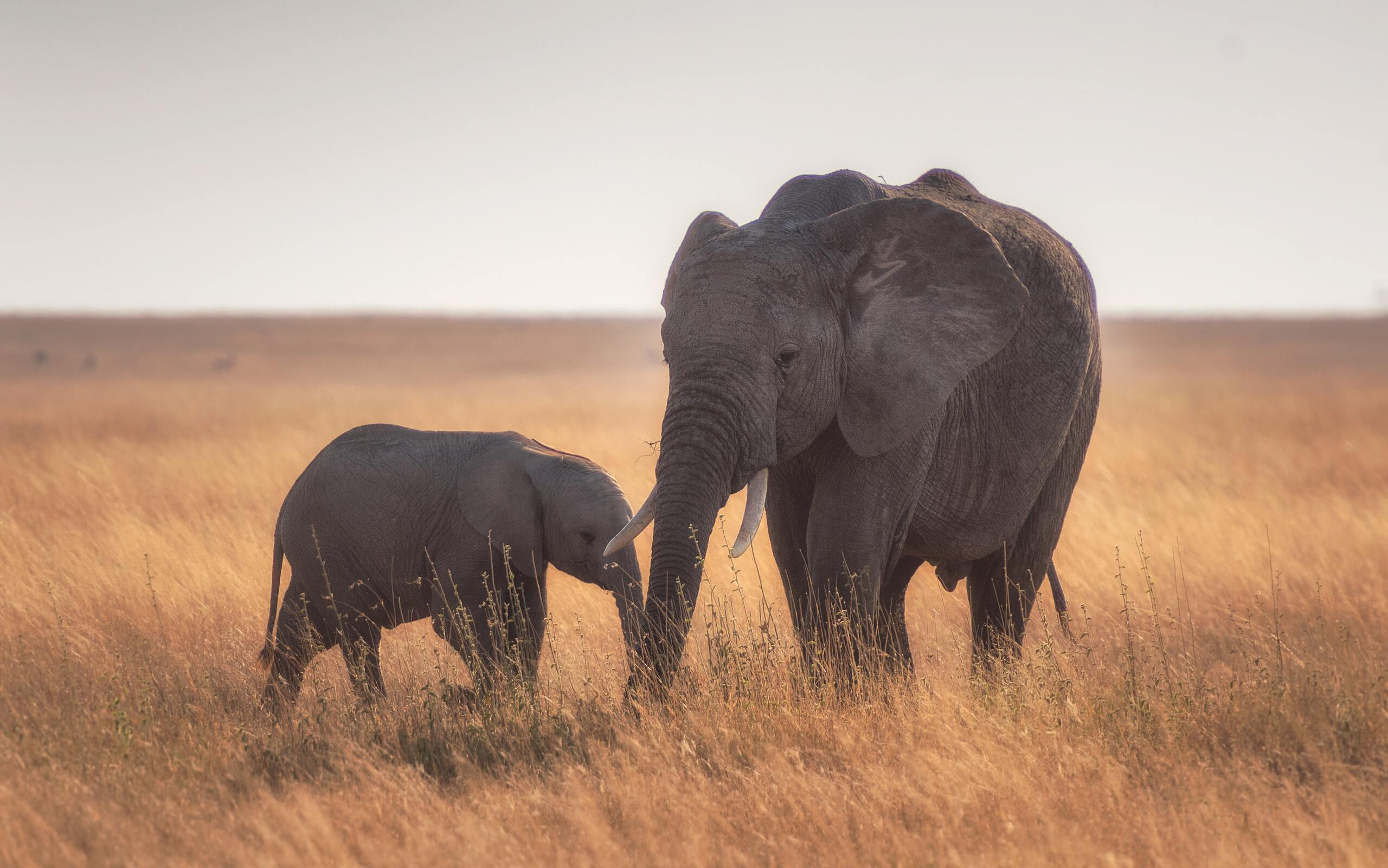mother-baby-elephant-4k-ki.jpg