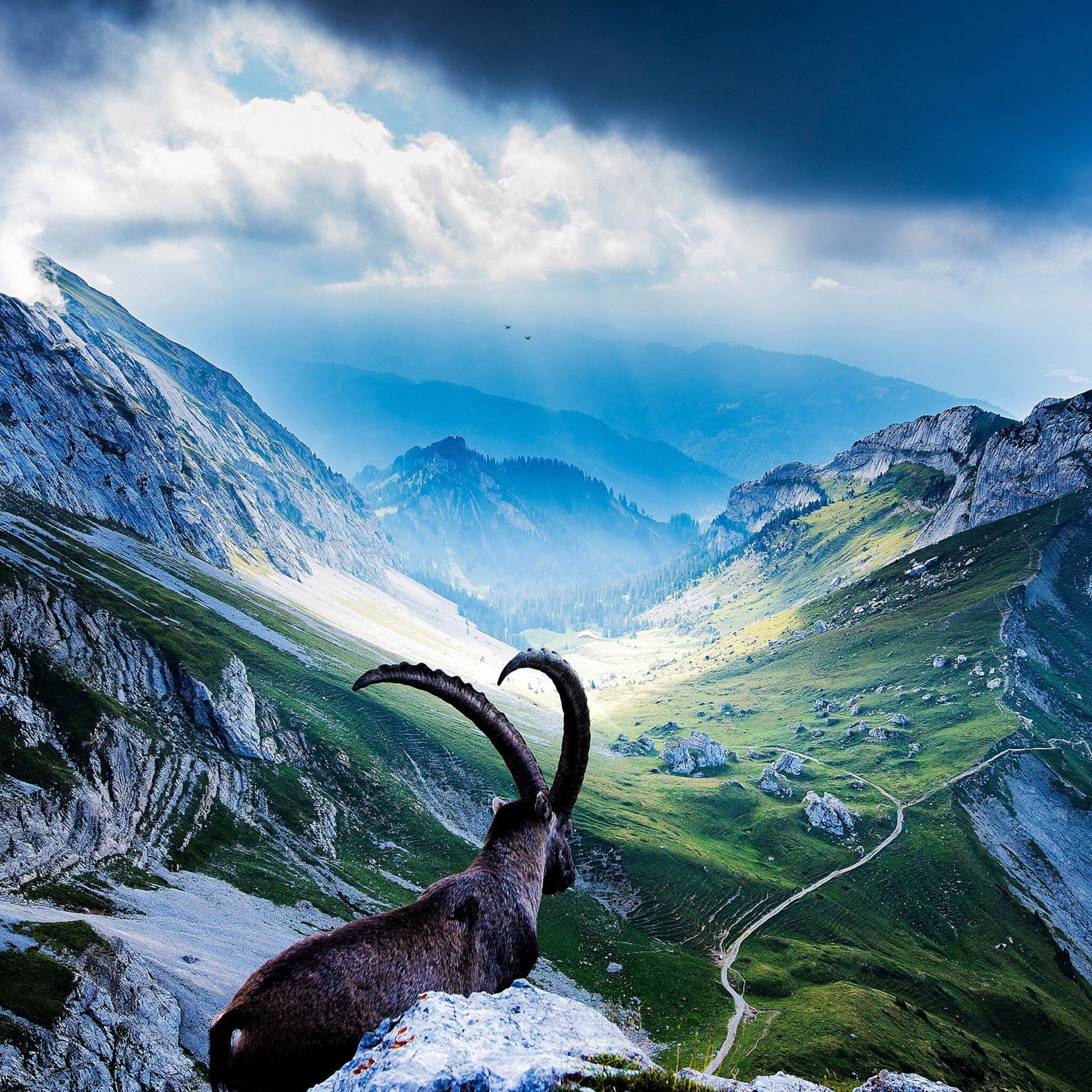 Ibex at Mount Pilatus Wallpapers in HD K and wide sizes