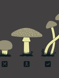 mushroom-minimalism-hd.jpg