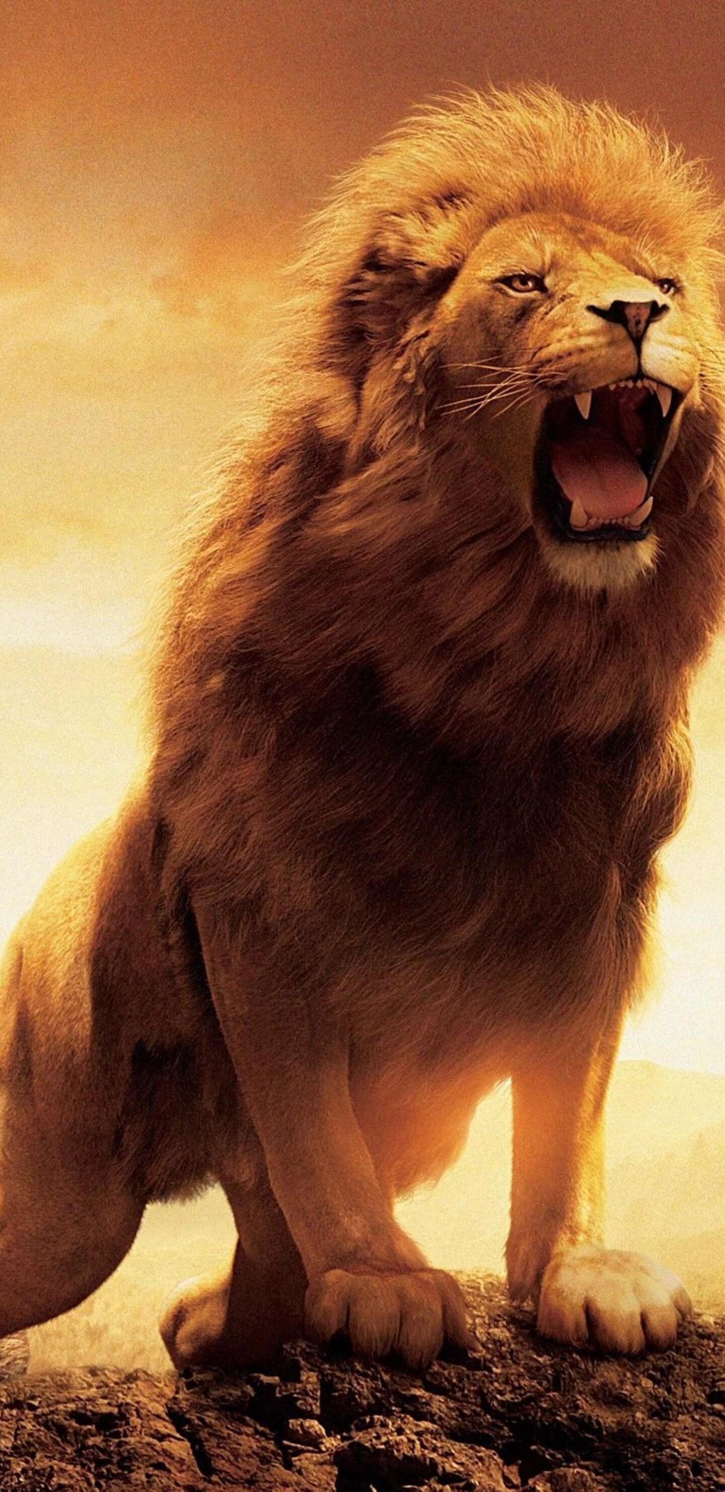 1440x2960 Narnia Lion Samsung Galaxy Note 9 8 S9 S8 S8 Qhd Hd 4k