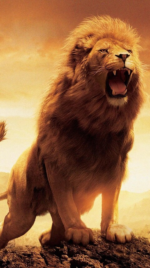 480x854 Narnia Lion Android One Hd 4k Wallpapers Images