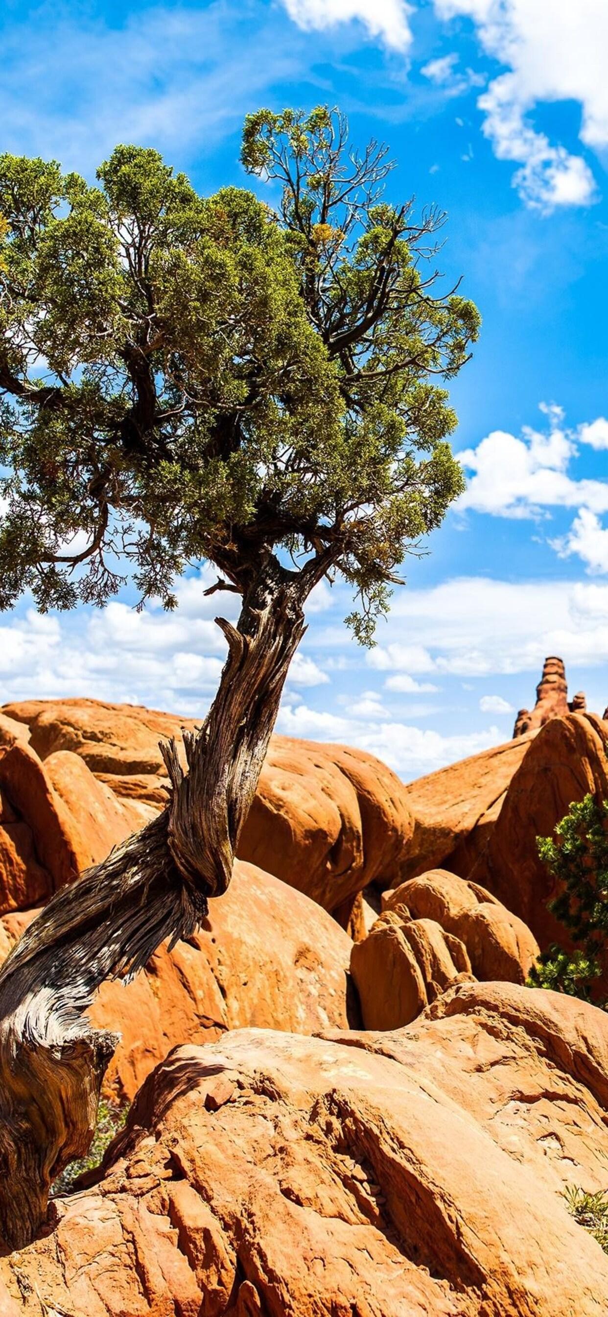 national-park-arches.jpg