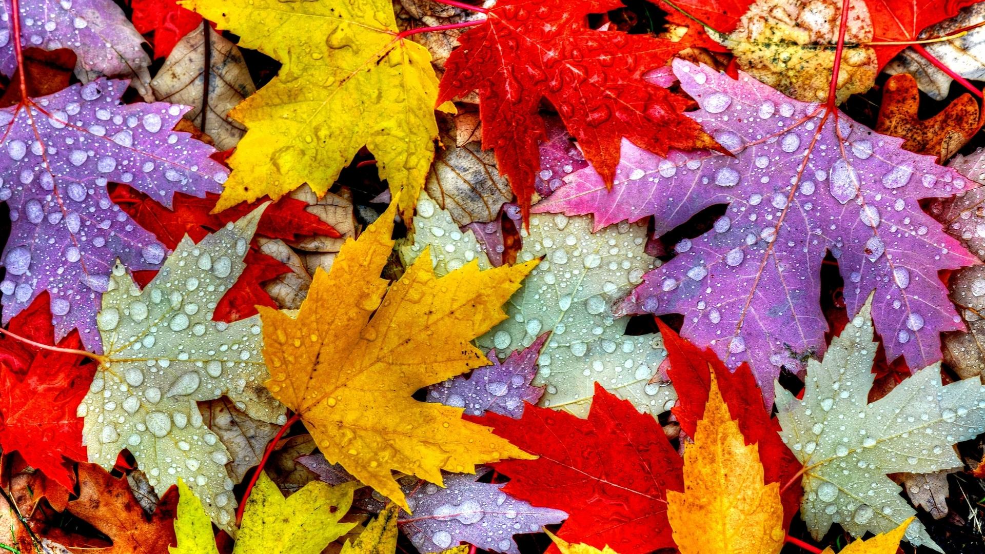 1920x1080 Nature Autumn Leaves Laptop Full HD 1080P HD 4k ...