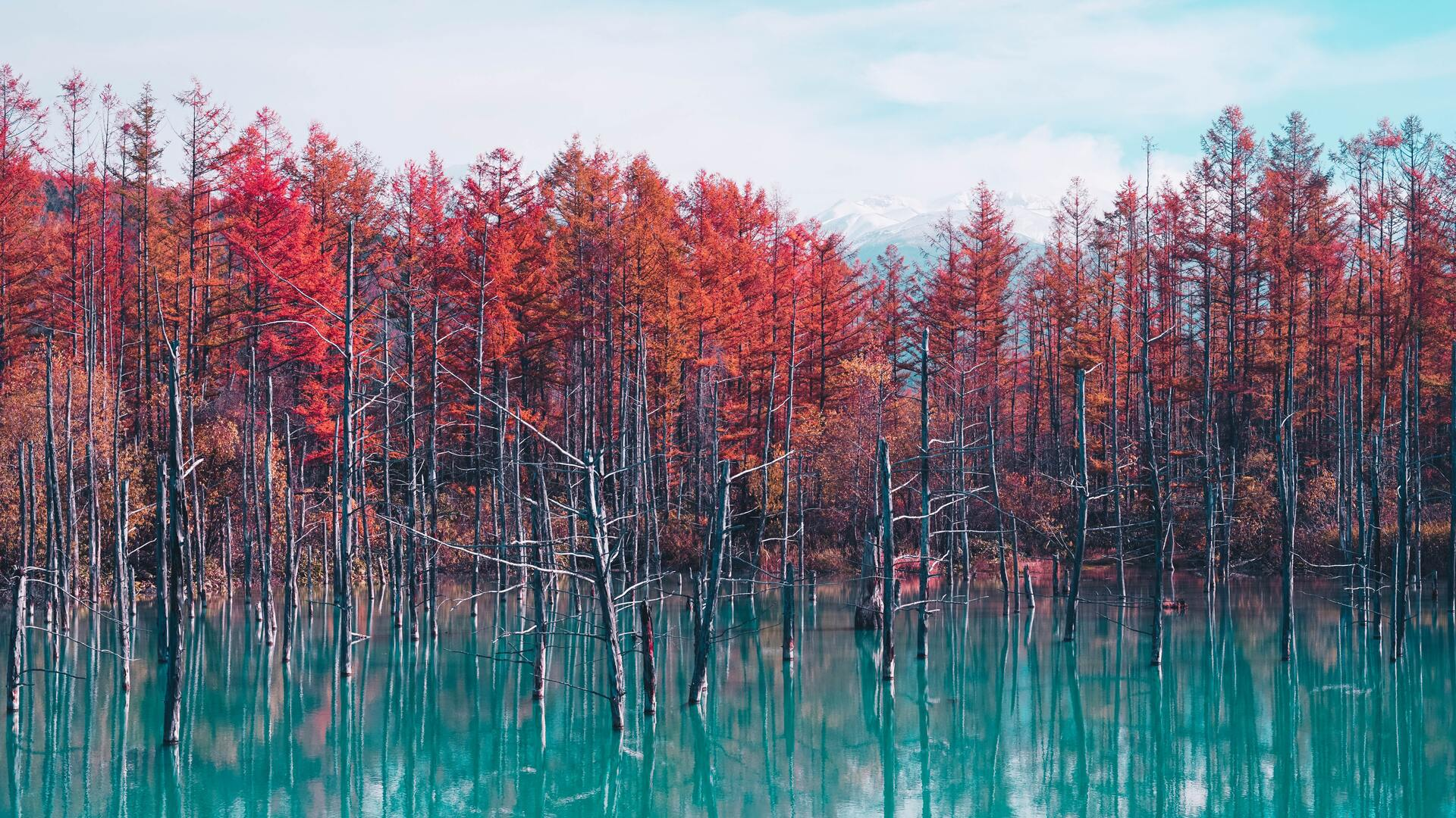 nature-landscape-trees-forest-fall-water-pond-sky-clouds-4k-bx.jpg