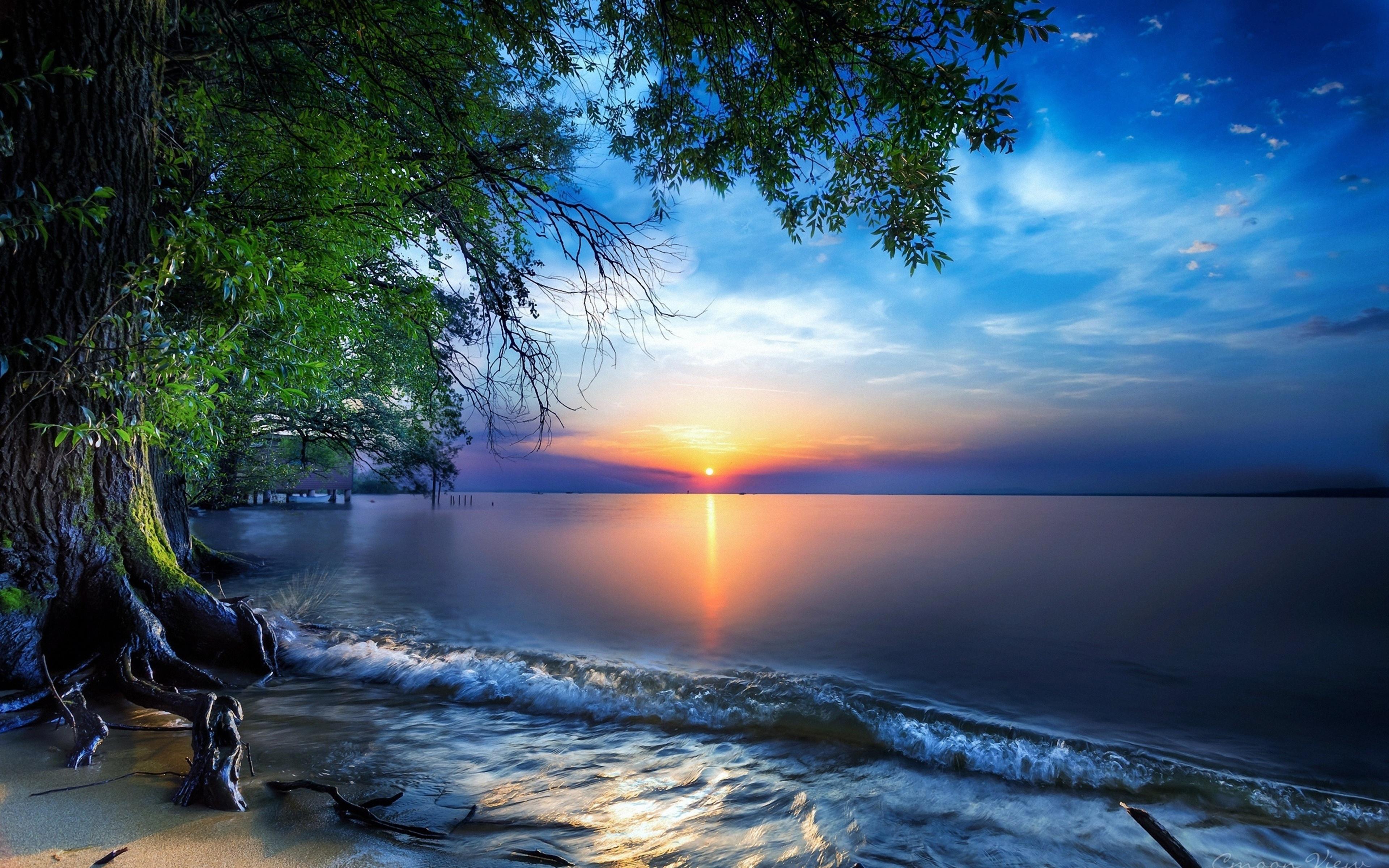 природа море небо горизонт солнце деревья скачать