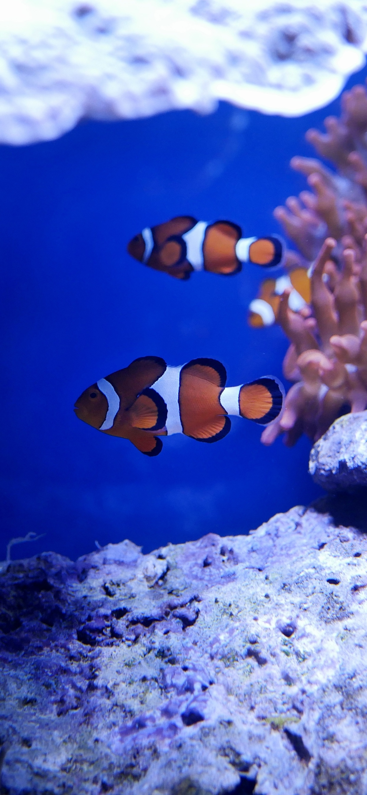 1242x2688 Nemo Fish In Real Underwater 5k Iphone Xs Max Hd