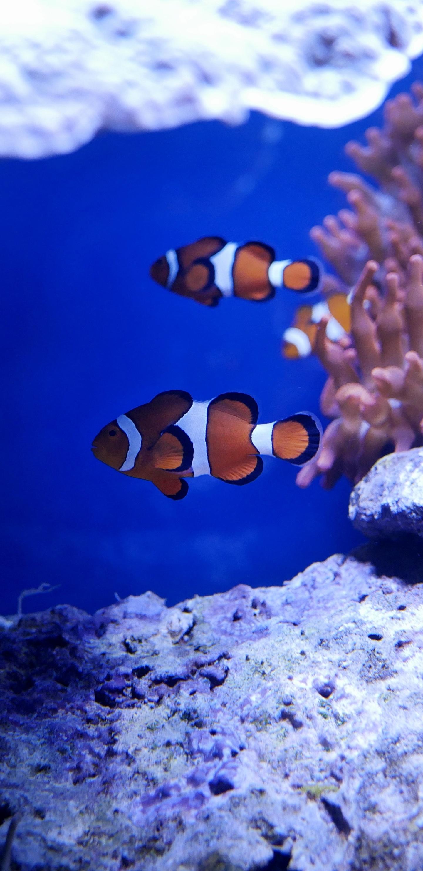 1440x2960 Nemo Fish In Real Underwater 5k Samsung Galaxy Note 9 8