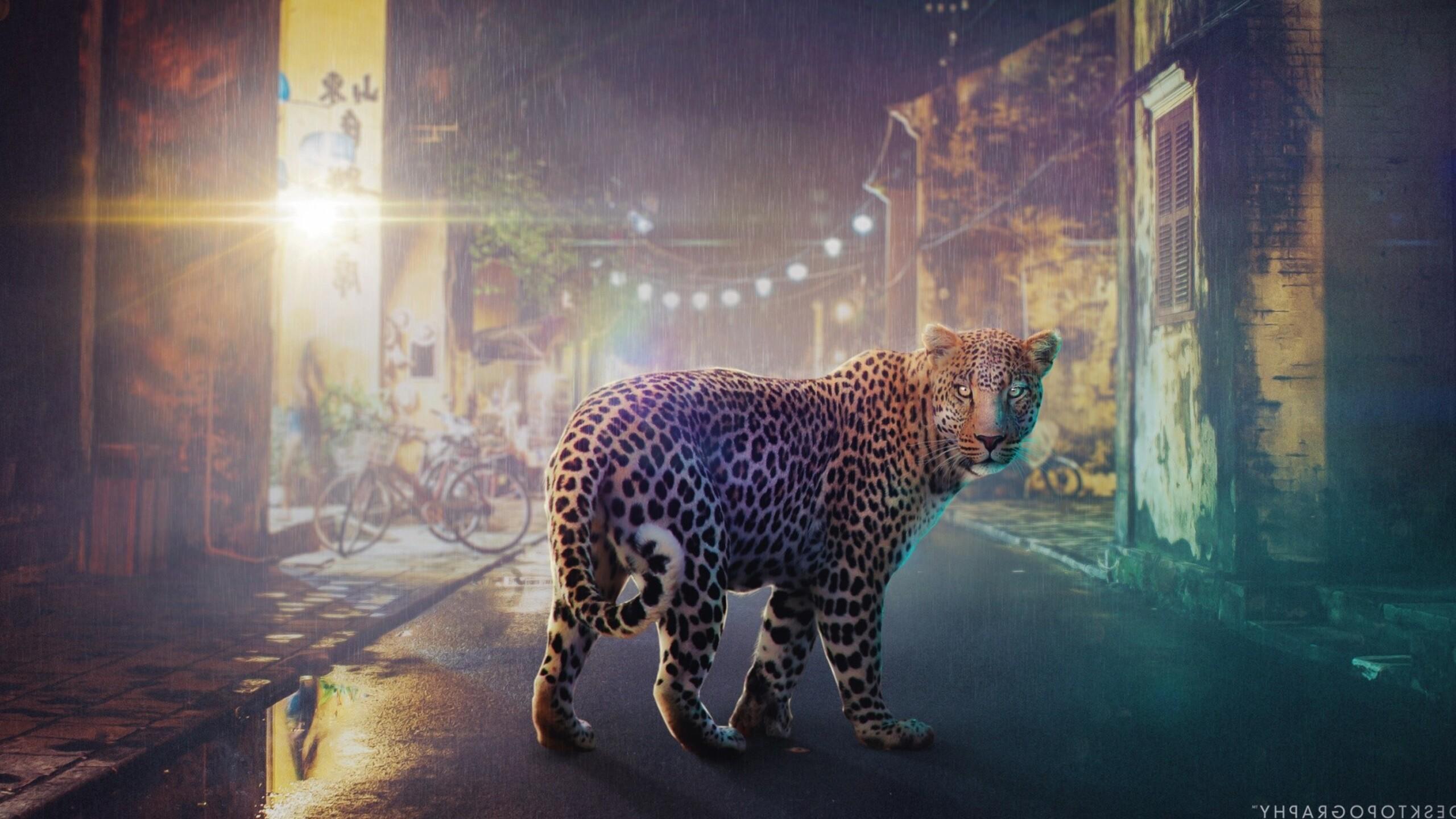 night-leopard.jpg
