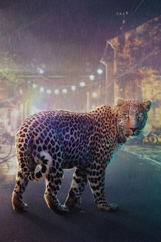 night-leopard.jpg