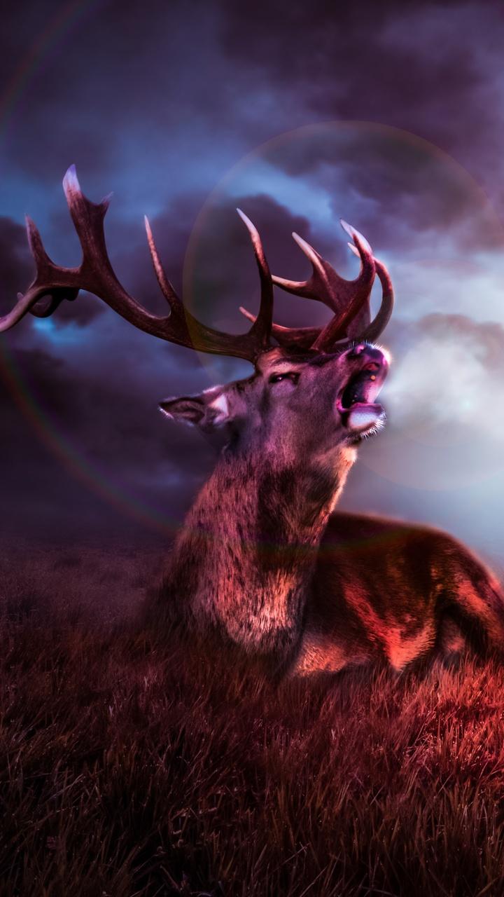 night-sky-deer-fantasy-8k-l0.jpg