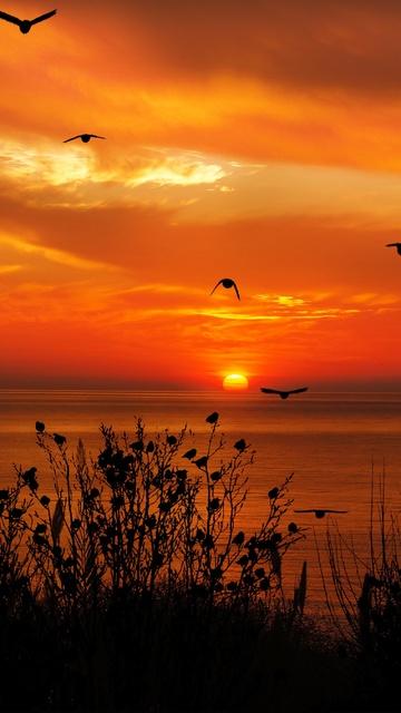 ocean-sky-birds-flying-towards-sunset-4k-bf.jpg