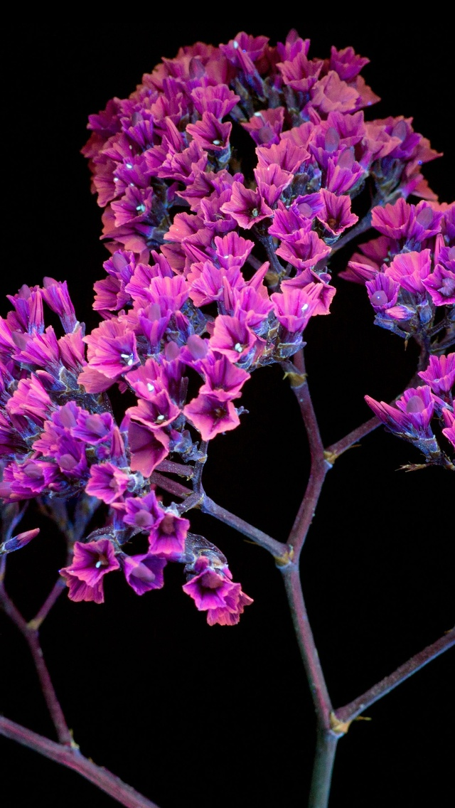 oled-purple-flower-ri.jpg