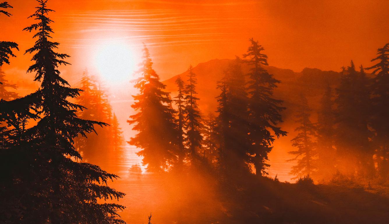 orange-sunrise-between-trees-4k-yu.jpg