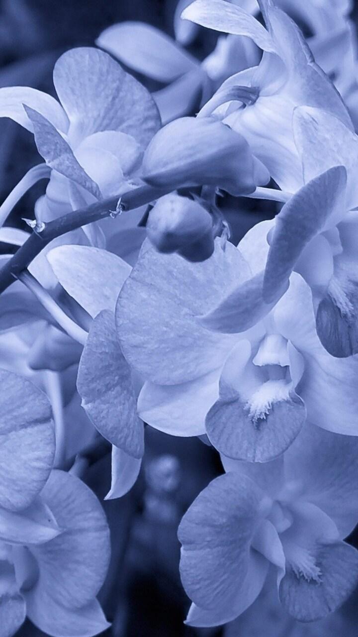 orchid-flowers.jpg