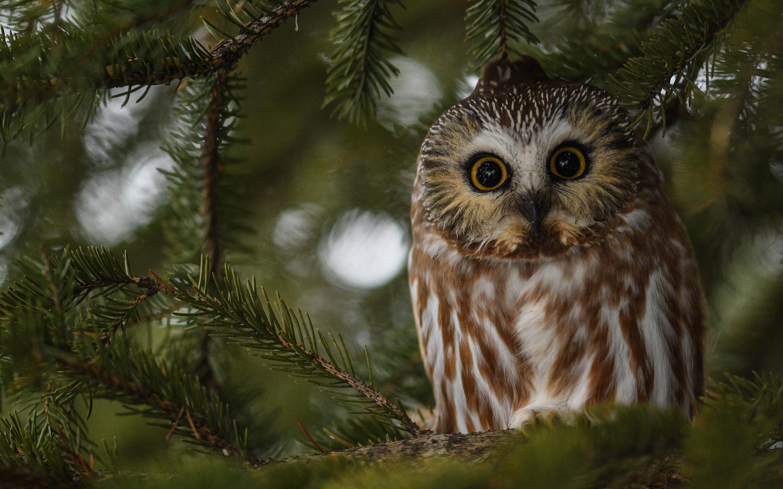 owl-bird-3j.jpg