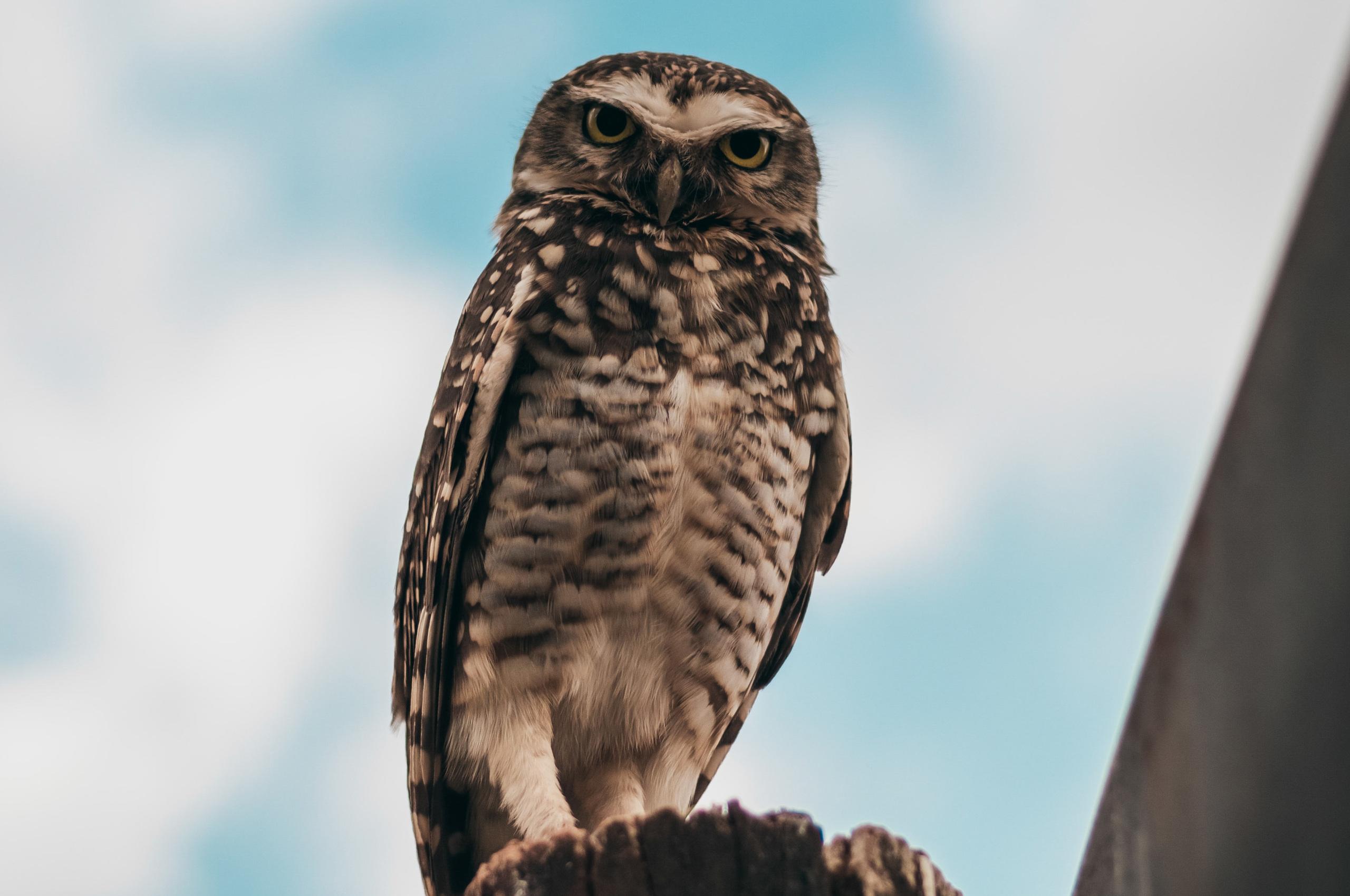 owl-bird-4k-gi.jpg