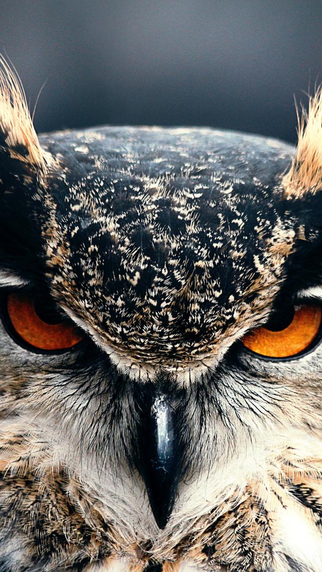 owl-closeup-4k-dr.jpg
