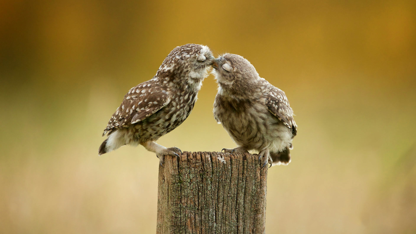 owl-couple-c5.jpg