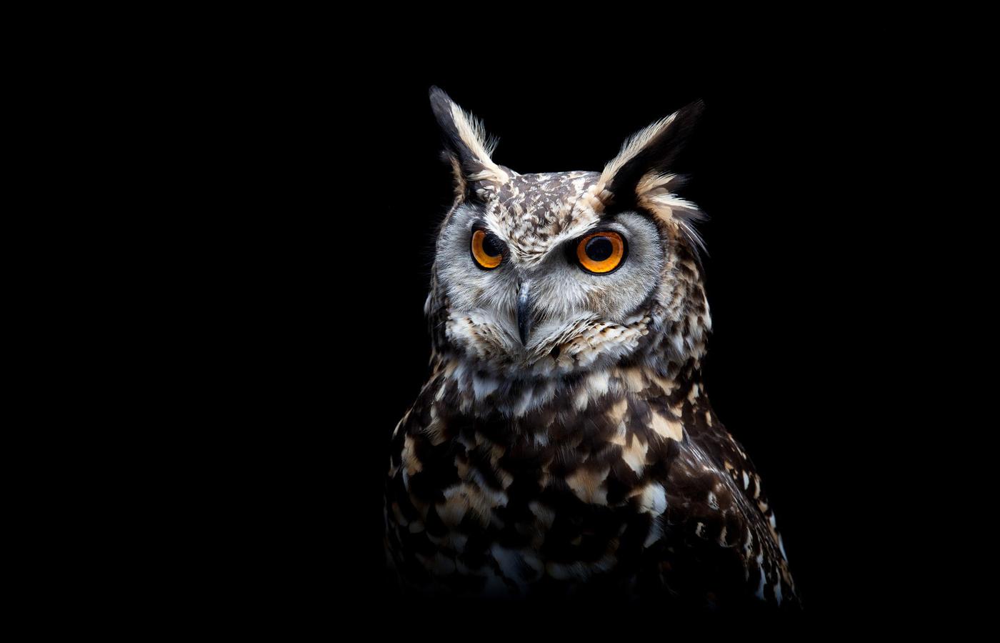 owl-dark-background-hy.jpg