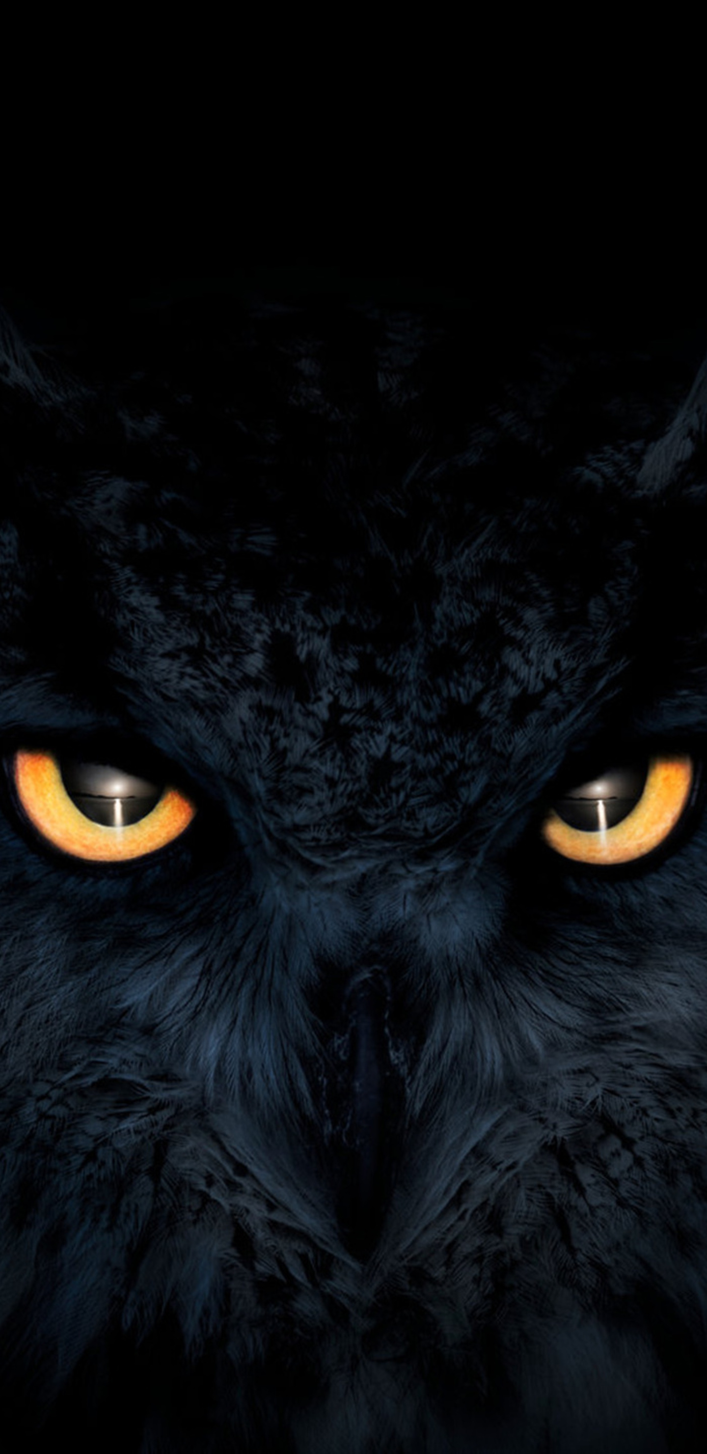 owl-dark-glowing-eyes-y3.jpg