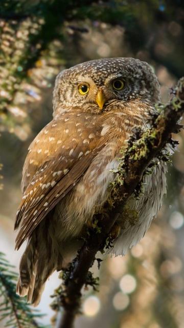owl-forest-depth-el.jpg
