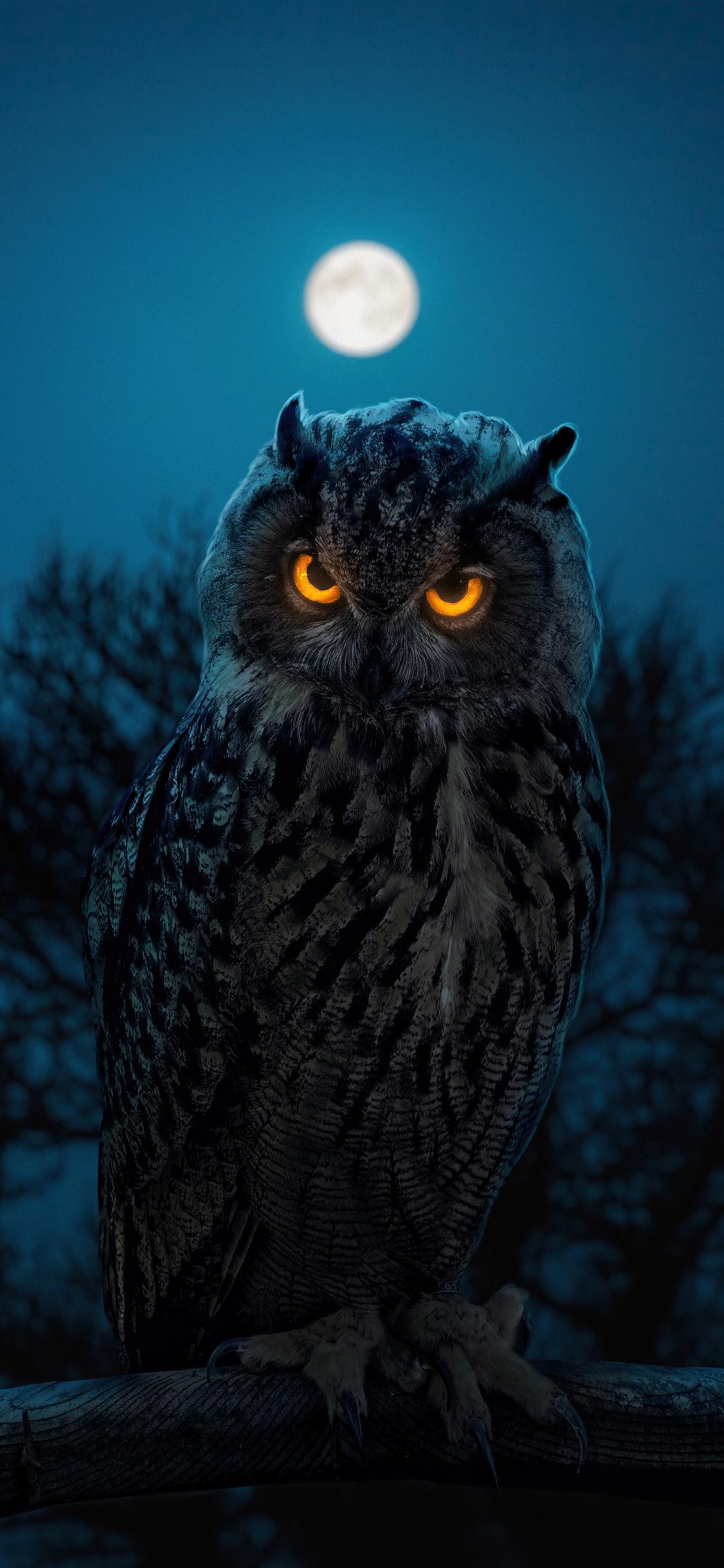 owl-glowing-eyes-s0.jpg