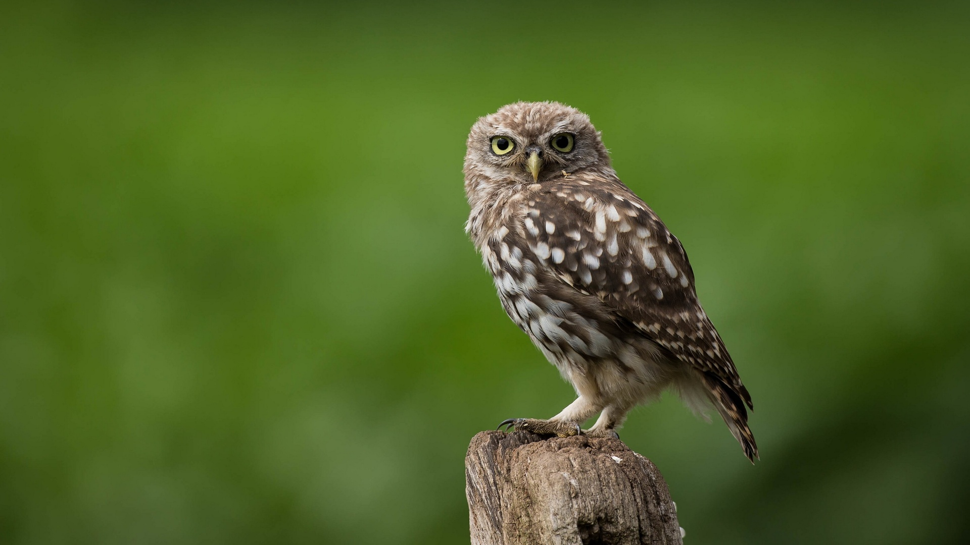 1920x1080 Owl Looking Laptop Full Hd 1080p Hd 4k Wallpapers Images Backgrounds Photos And Pictures