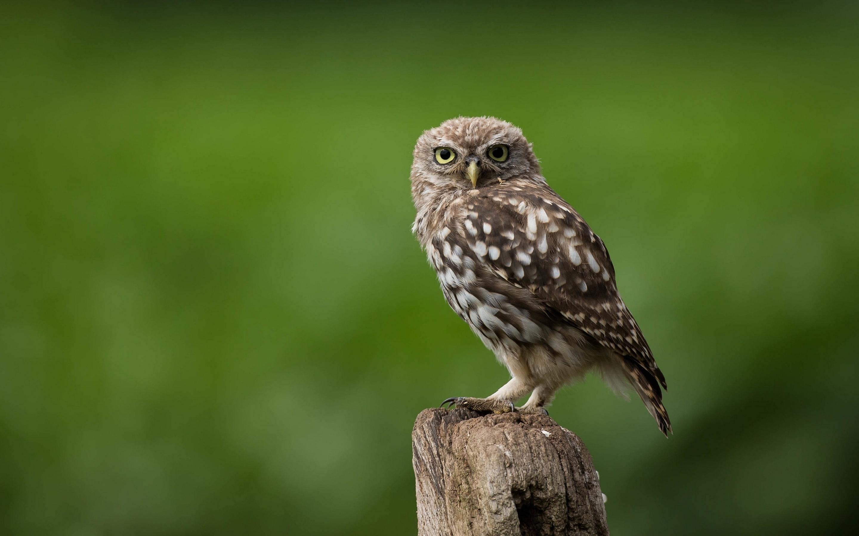 owl-looking-53.jpg