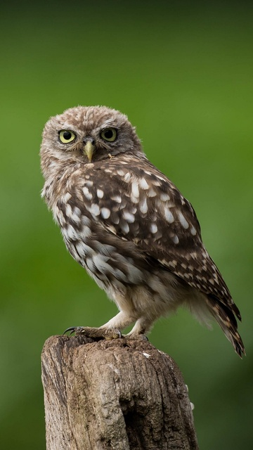 owl-looking-53.jpg
