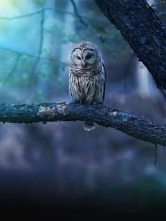 owl-nature-forest-qv.jpg