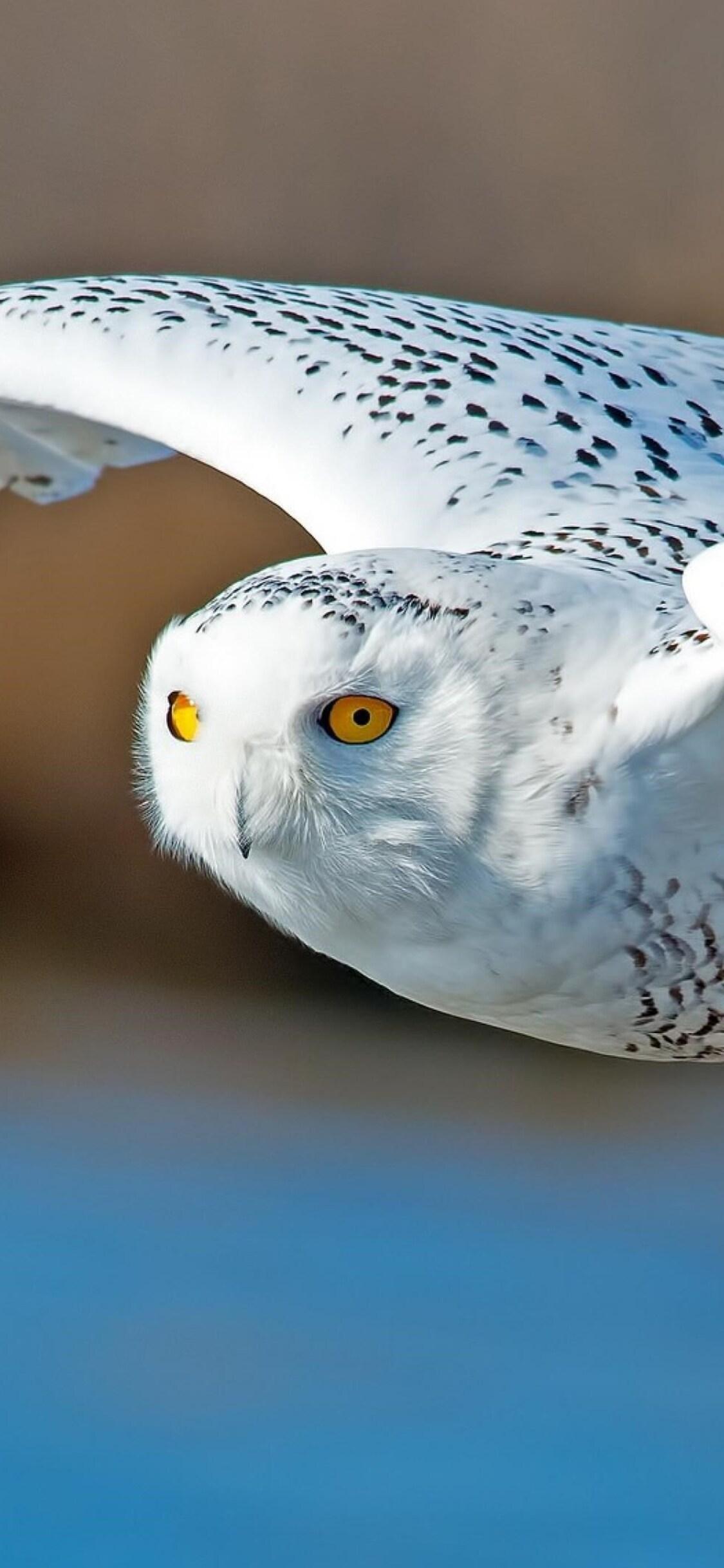 owl-predator.jpg