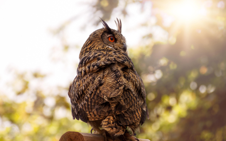 owl-red-eye-4k-9k.jpg