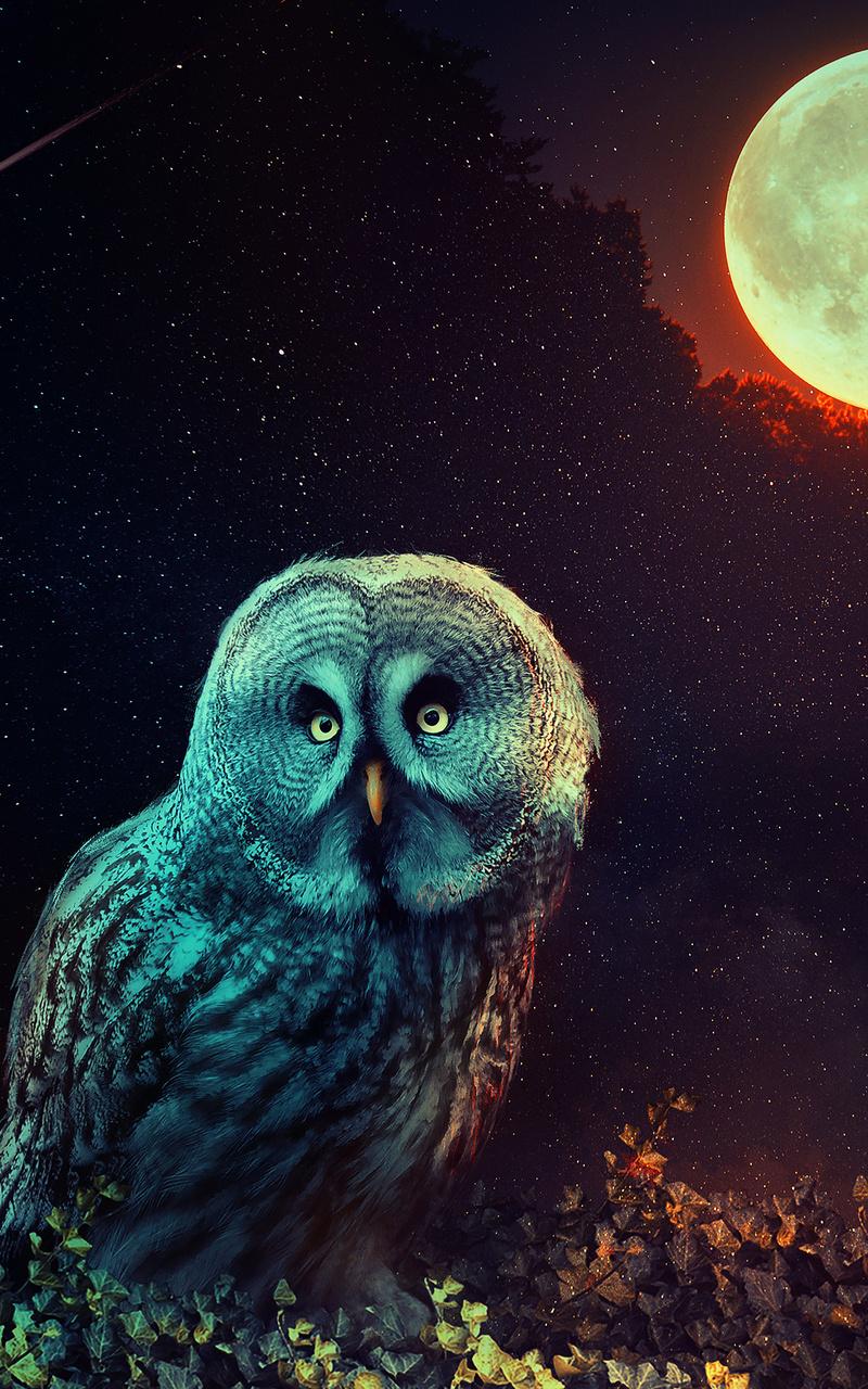 owl-the-night-guard-tc.jpg