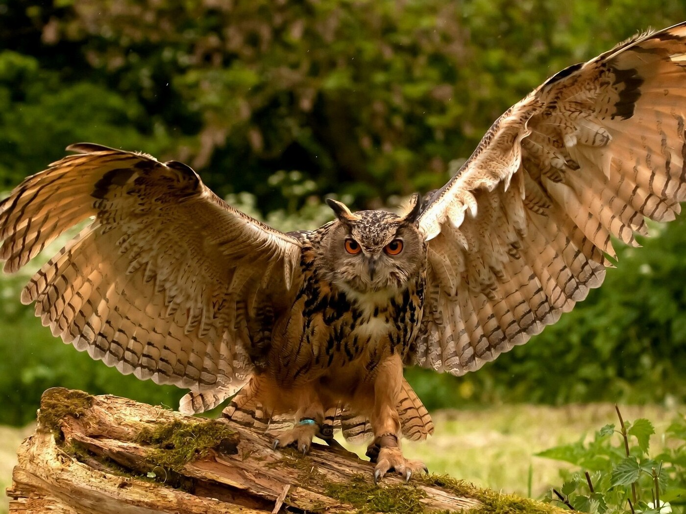 owl-wings-wallpaper.jpg