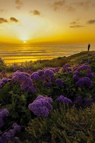 pacific-ocean-california.jpg