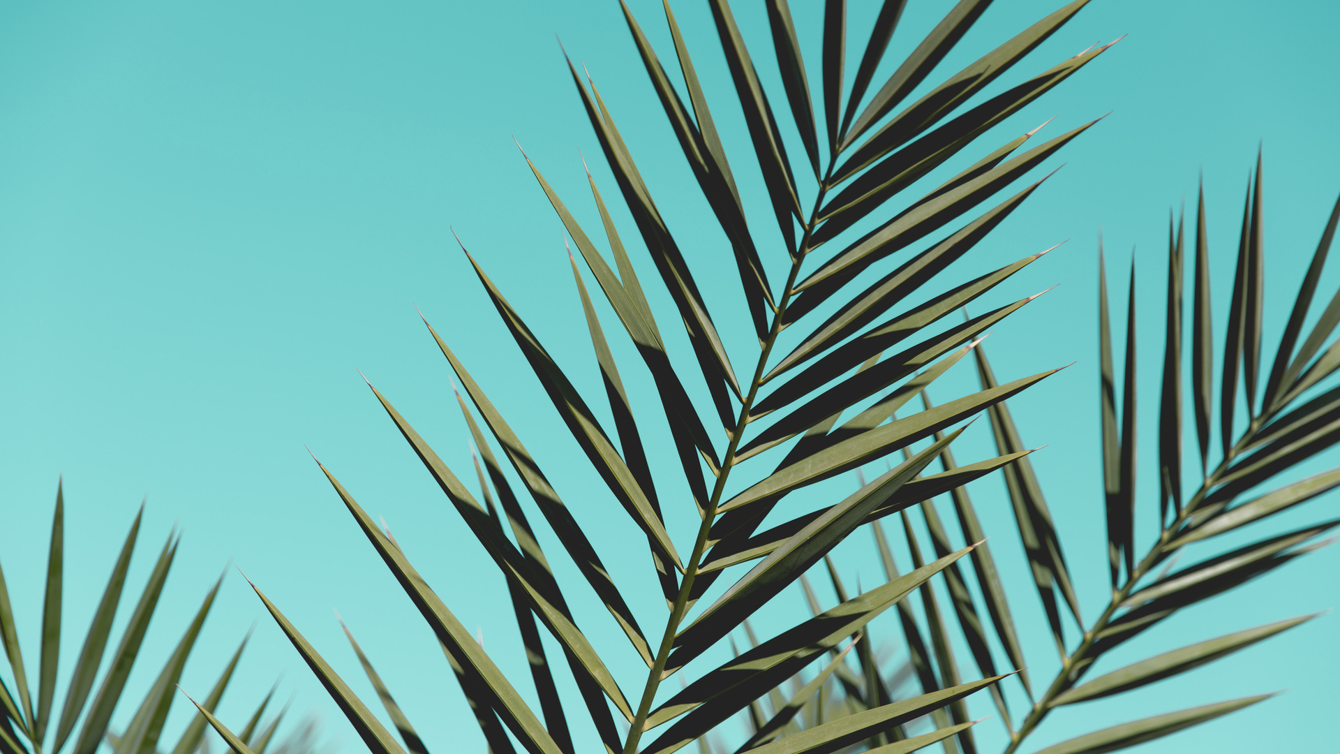 1920x1080 Palm Leaves Sunlight Day Green Leaves Laptop