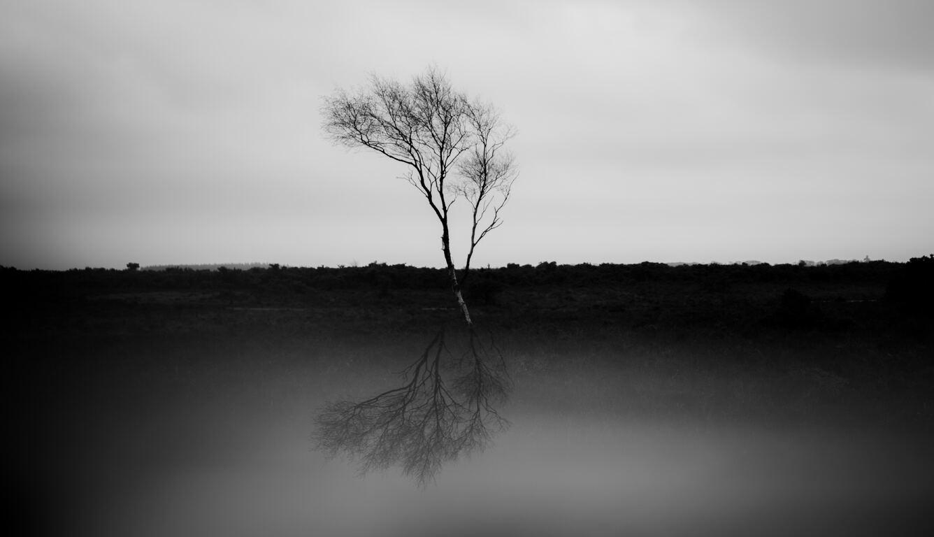 palm-tree-monochrome-5k-bi.jpg