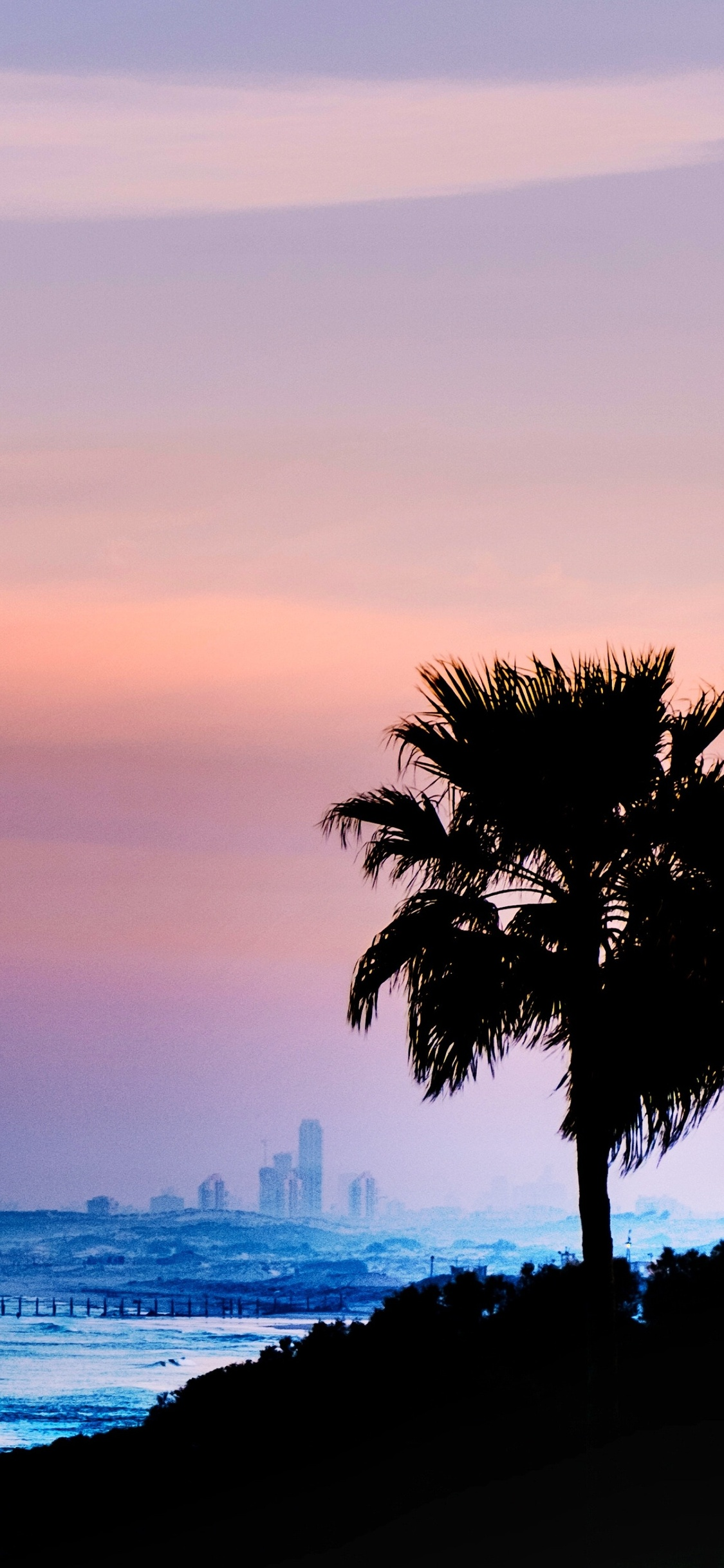 1125x2436 Palm Tree Outdoors 4k Iphone Xs Iphone 10 Iphone X